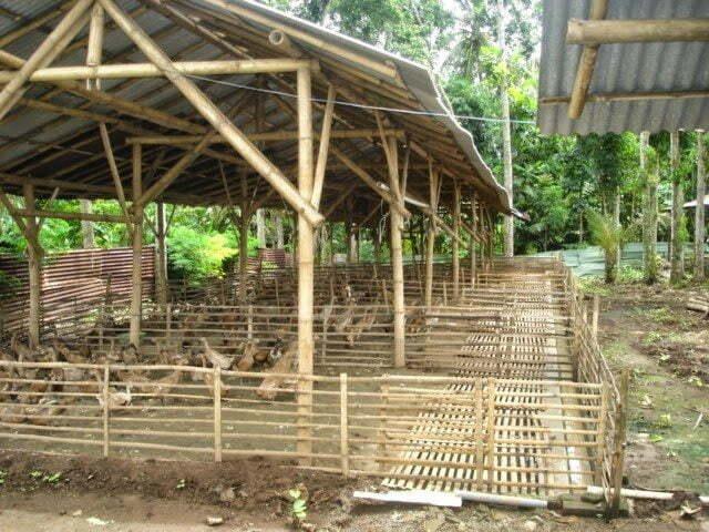 kandang-bebek-dari-bambu-9276052