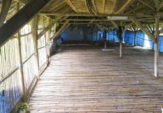 lantai-kandang-ternak-bebek-pedaging-1022244