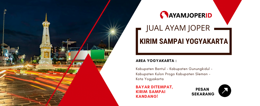 Jual Ayam Joper Yogyakarta