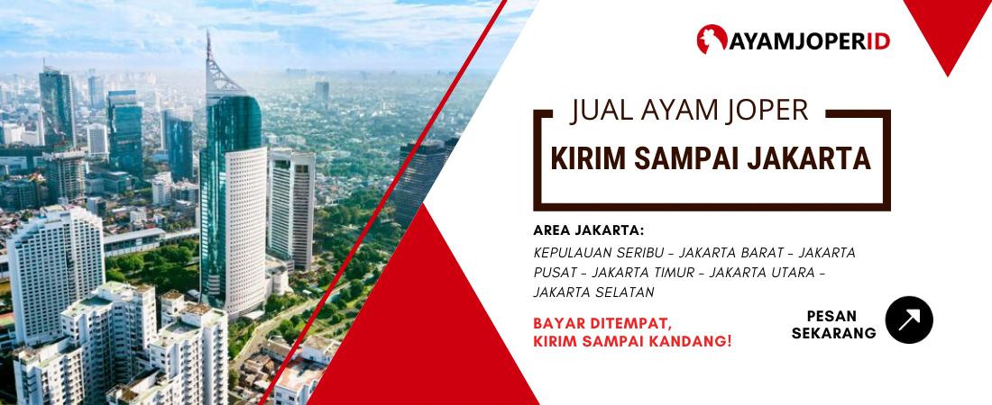 Jual Ayam Joper Jakarta
