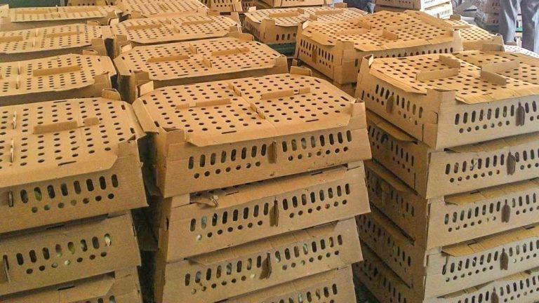 box-doc-ayam-joper-min-768x432