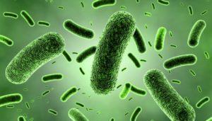 bakteri-300x171-3880039