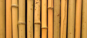 batang-bambu-1-300x132-7631152