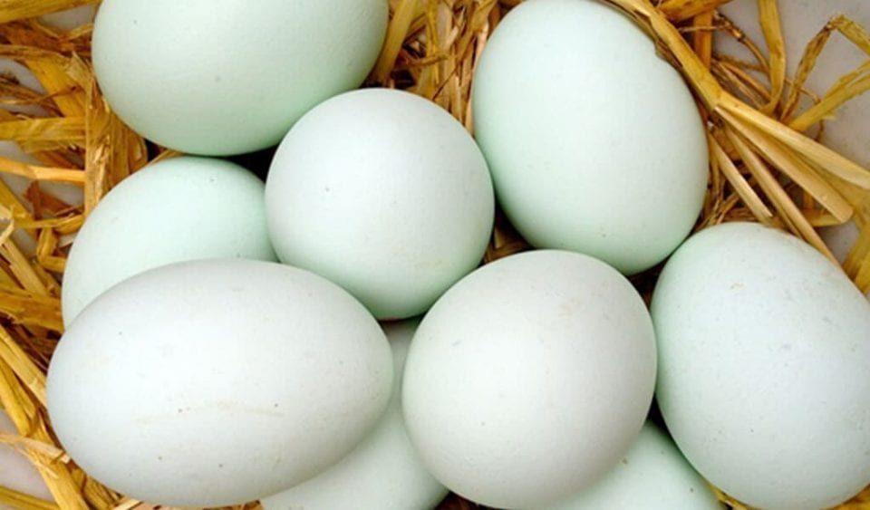 harga-telur-bebek-min-4398158