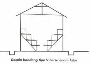 kandang-ayam-v-6-lajur-300x215-4217742